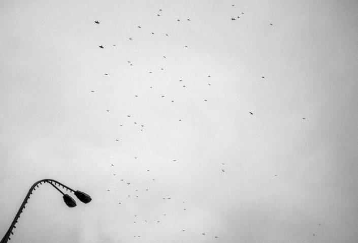 Birds over Minsk